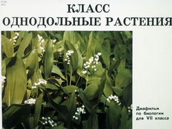 Диафильм Класс однодольные растения бесплатно