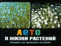 Диафильм Лето в жизни растений бесплатно