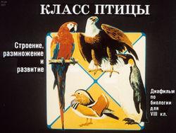 Диафильм Класс птицы бесплатно