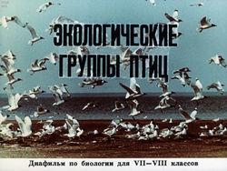 Диафильм Экологические группы птиц бесплатно
