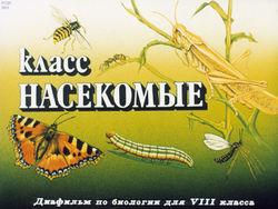 Диафильм Класс насекомые бесплатно