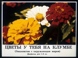 Диафильм Цветы у тебя на клумбе бесплатно