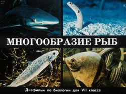 Диафильм Многообразие рыб бесплатно