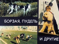 Диафильм Борзая, пудель и другие бесплатно