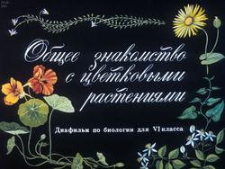 Диафильм Общее знакомство с цветковыми растениями бесплатно