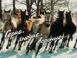 Диафильм Серые, гнедые, вороные бесплатно