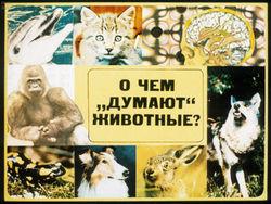 """Диафильм О чем """"думают"""" животные бесплатно"""