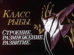Диафильм Класс рыбы бесплатно