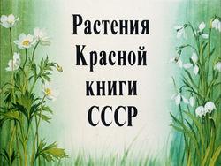 Диафильм Растения Красной книги СССР бесплатно