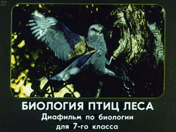 Диафильм Биология птиц леса: [Диафильм по биологии для 7 кл.] бесплатно