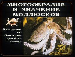 Диафильм Многообразие и значение моллюсков бесплатно