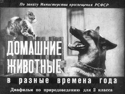 Диафильм Домашние животные в разные времена года бесплатно