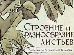 Диафильм Строение и разнообразие листьев бесплатно