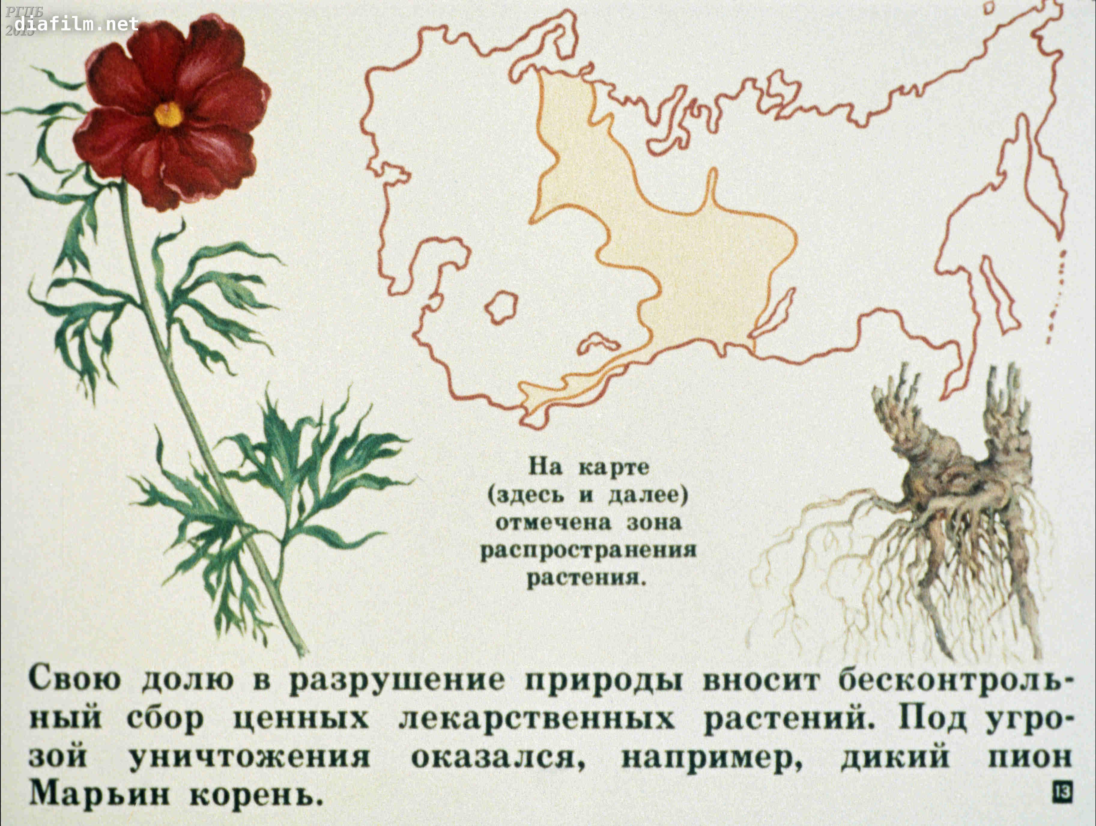 растения красной книги картинки с описанием как рисовать следует отметить
