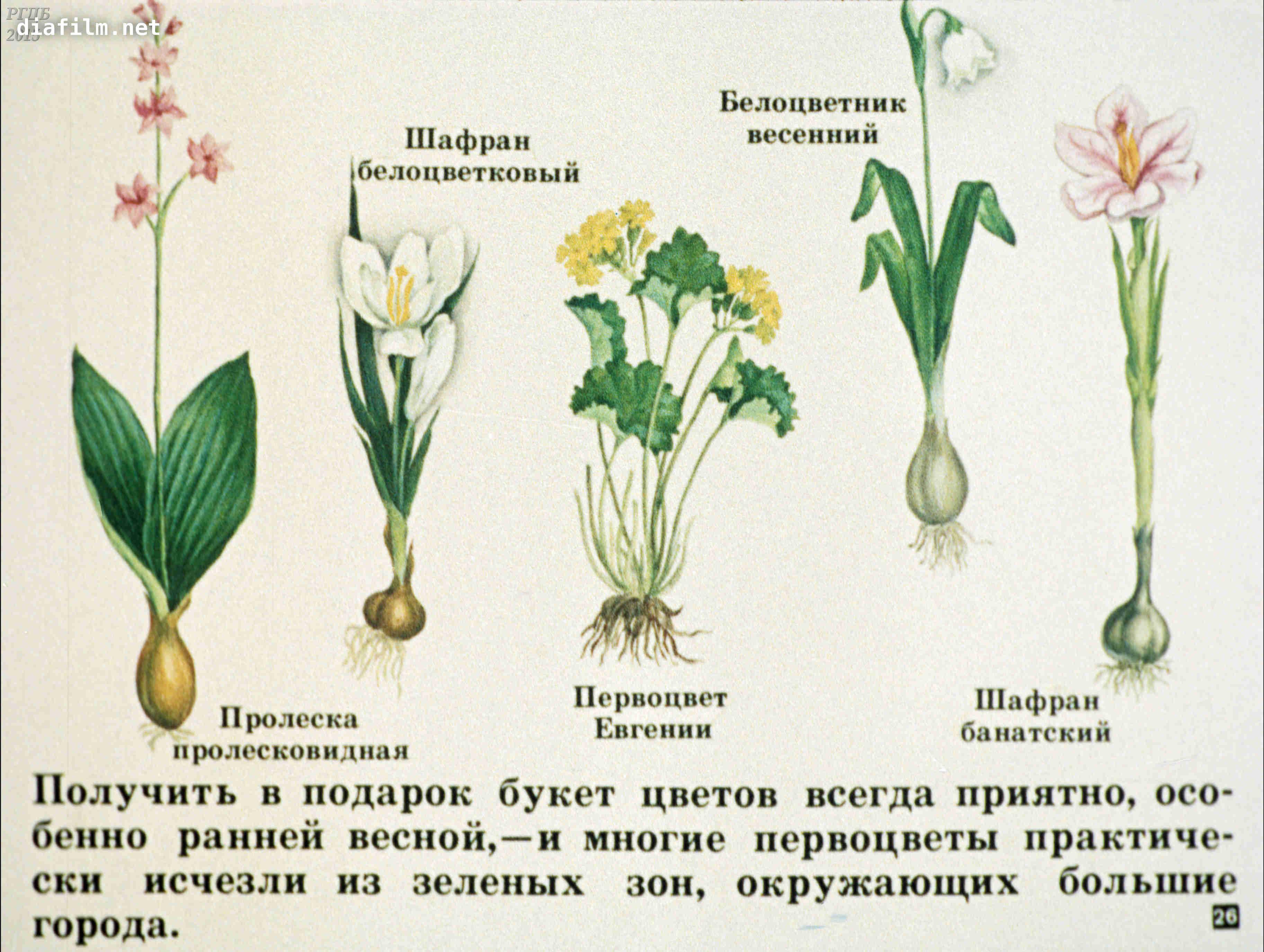 растения красной книги с картинками и названиями написана подготовленной доске